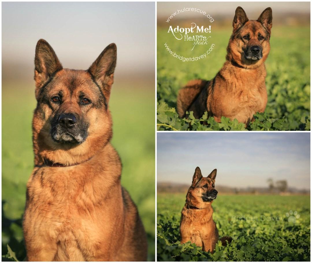 Ruby HULA Animal Rescue