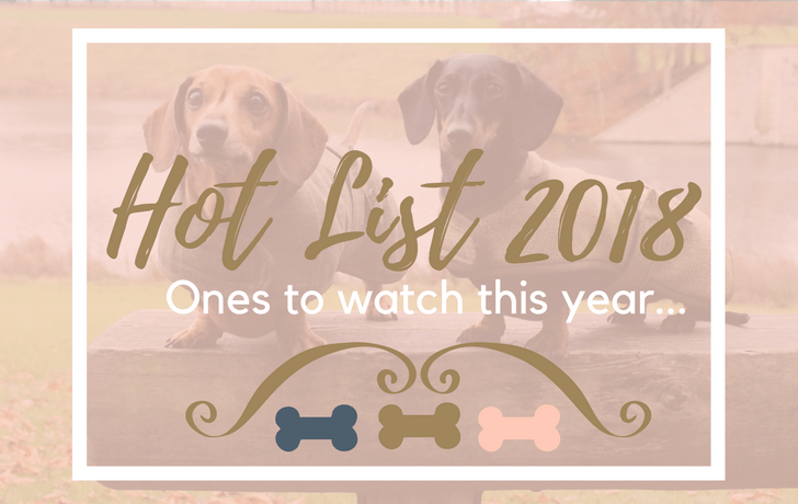 Best Dog Brands 2018 Our Hot List Twilight Bark Uk