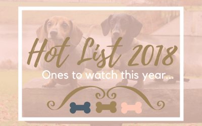 Best Dog Brands 2018: Our 'Hot List'