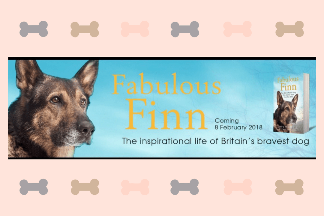 Click to discover why we think Finn for Change could be one of the best dog brands 2018