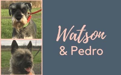 DBARC – Watson & Pedro
