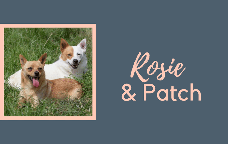 Rosie & Patch!