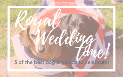5 of the best dog products for The Royal Wedding