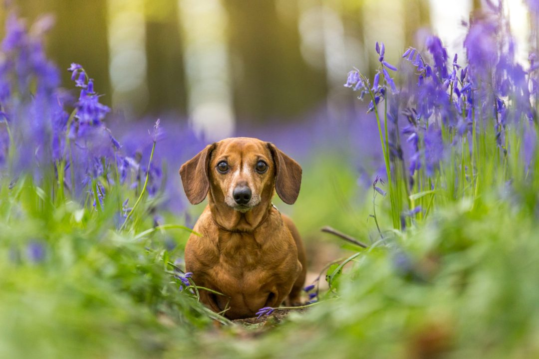 Some tips for dog owners about why dogs and nature make a pawfect combination . Click to discover more.