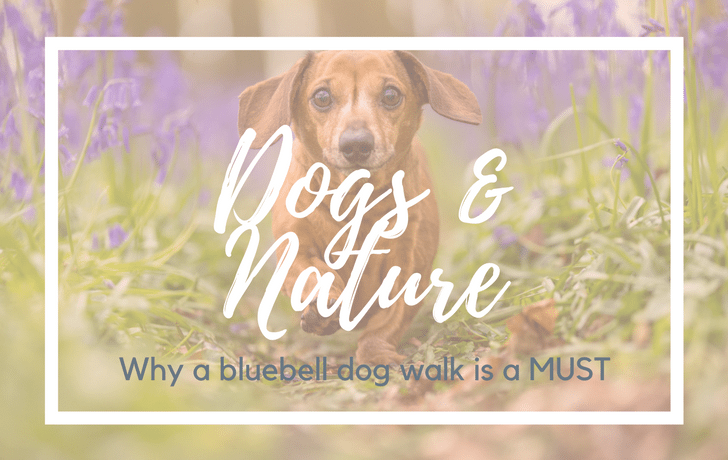 Dogs and Nature: Why a bluebell dog walk is a MUST!