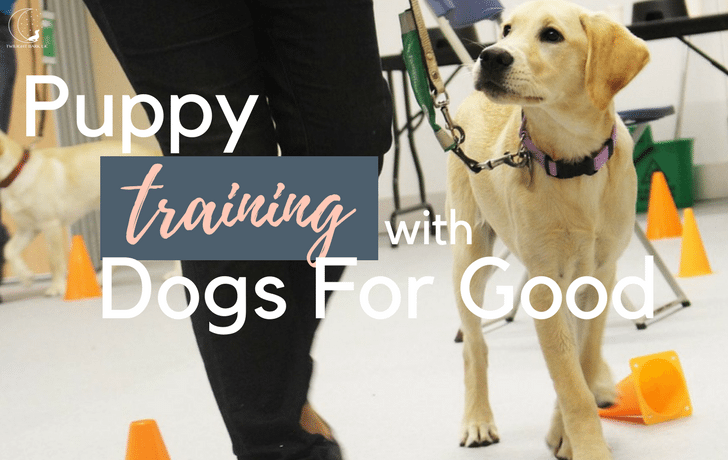 Behind the scenes at Dogs for Good – Assistance Dogs of the Future