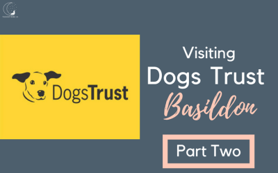 The Only Way is…Dogs Trust Basildon (Part Two)