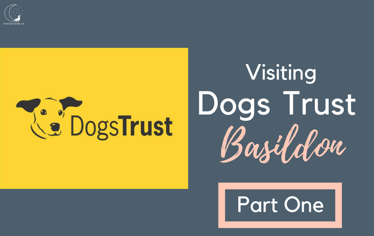 The Only Way is…Dogs Trust, Basildon (Part One)