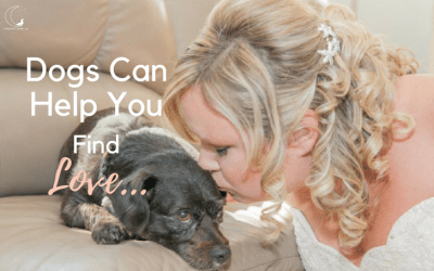 Valentine's Special – Dogs Who Helped 4 Couples Find Love!