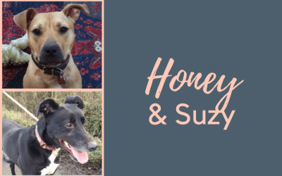 #SundayDogStories – Honey & Suzy