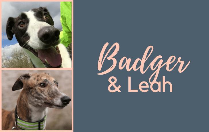 Badger & Leah