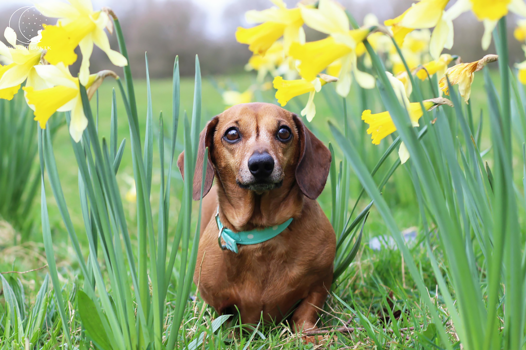Click to discover why we think Spring is pawfect for fun with dogs!