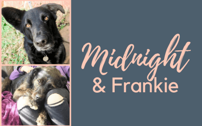 Holly Hedge Animal Sanctuary – Midnight & Frankie