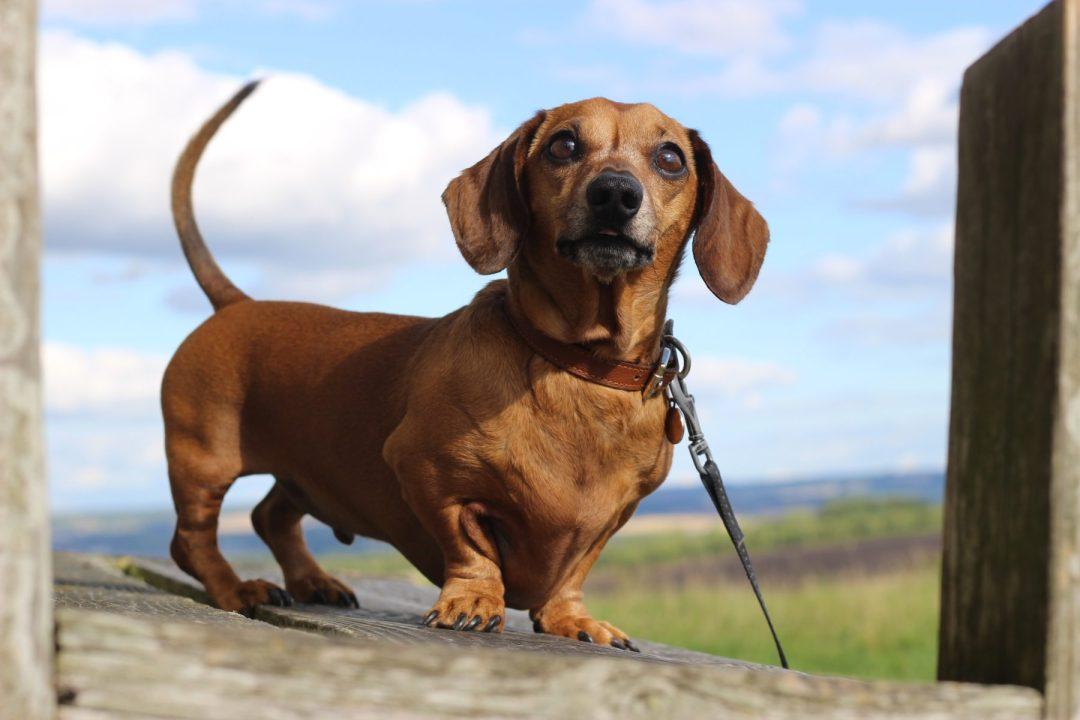 Dog Community | Twilight Bark UK