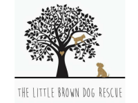 The Little Brown Dog Rescue