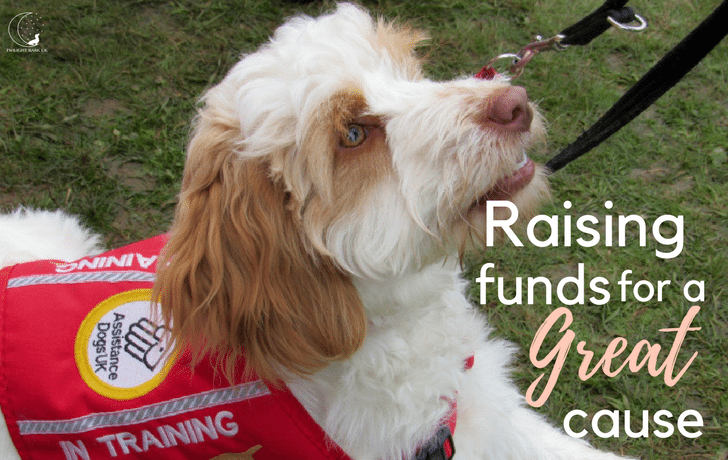 Dogs Day Out; Raising Funds For Medical Detection Dogs!