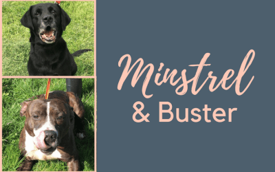 #SundayDogStories – Minstral & Buster