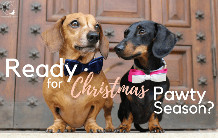 *Christmas Pawty Style with Paws With Opulence