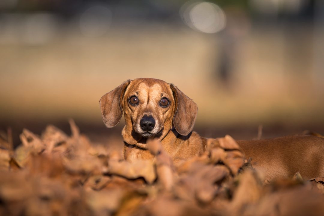 ted-london-dog-photography-20