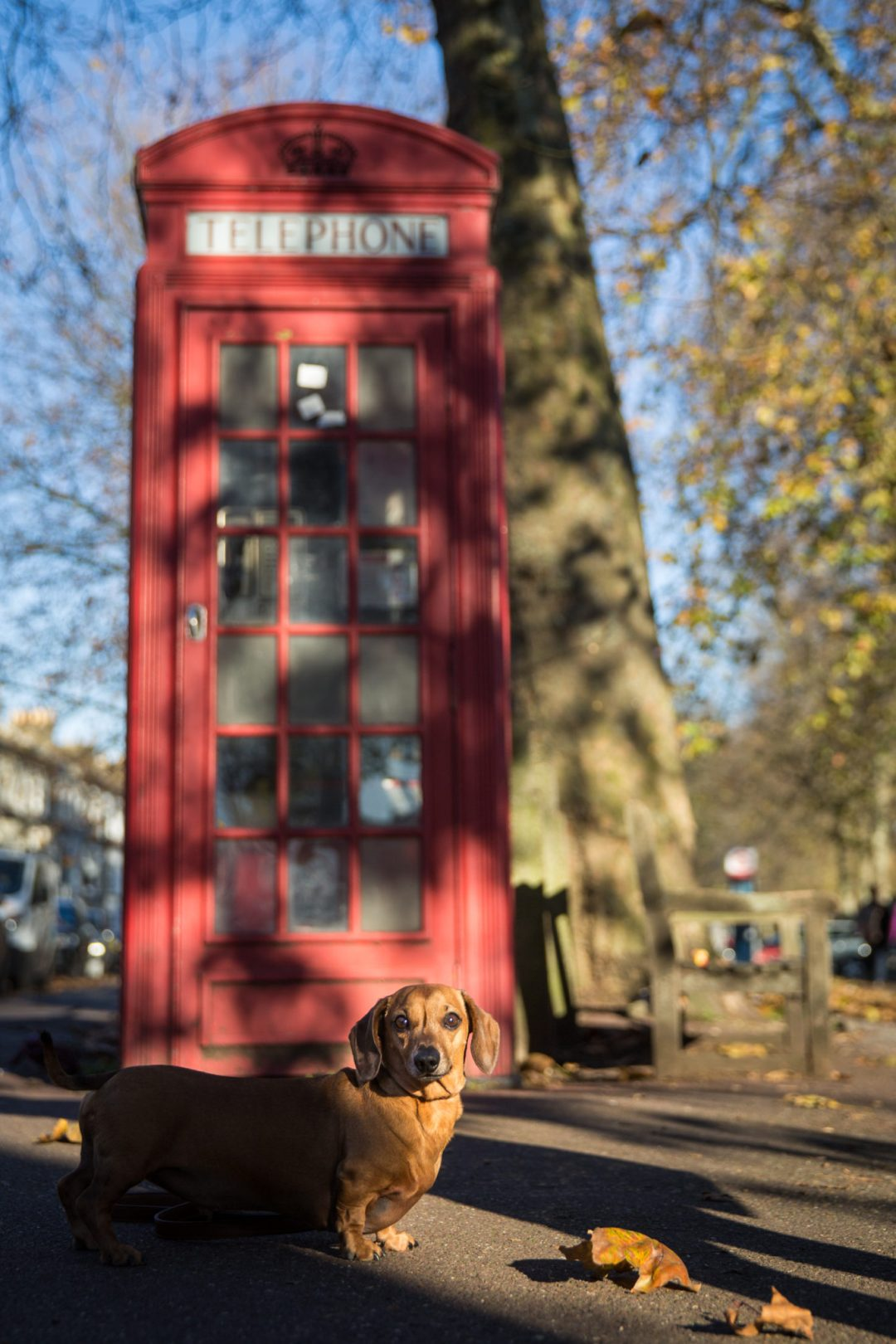 ted-london-dog-photography-23