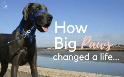 The Good Vet & Pet Guide – Inspired By The Love Of A Great Dane