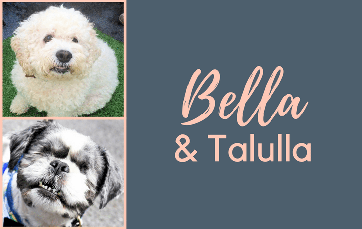 The Mayhew – Bella & Tallula