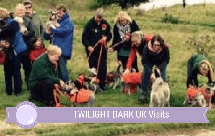 Schnauzerfest 2015 – Not your ordinary dog walk!