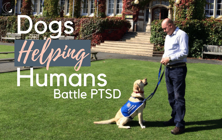 Veterans With Dogs: Helping Battle PTSD