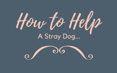 We Found a Stray Dog! What You Should Do If You Find One Too…