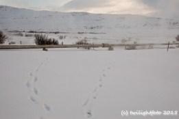 Meine Spuren im Schnee