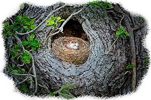 birds-nest-with-bracelet