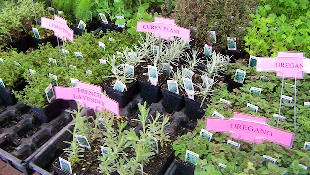More seedlings for sale. Have you planted yours yet? Looking forward to cooking with fresh herbs?