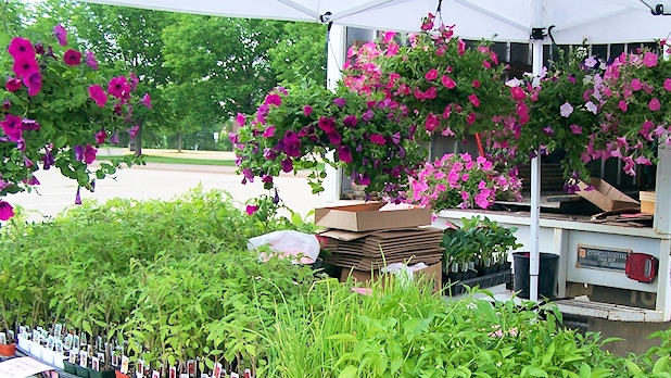 hanging-baskets-and-seedings-at-the-burnsville-farmers-market
