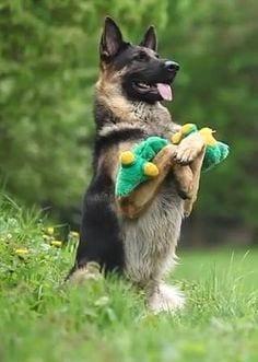 Fallout 4, dogmeat, dog
