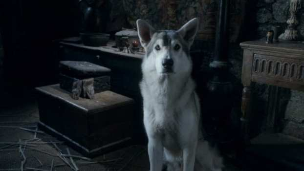 2. Which direwolf was supposed to be sentenced to death after Joffrey got struck in Season 1?