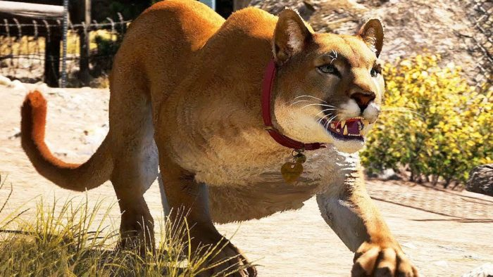 far cry 5 animals ranked