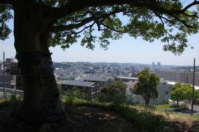 Muv-Luv Tree (7)