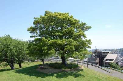 Muv-Luv Tree (9)