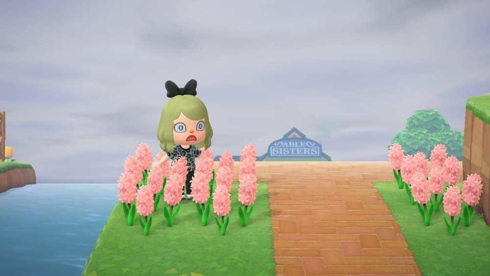 flowers, new horizons