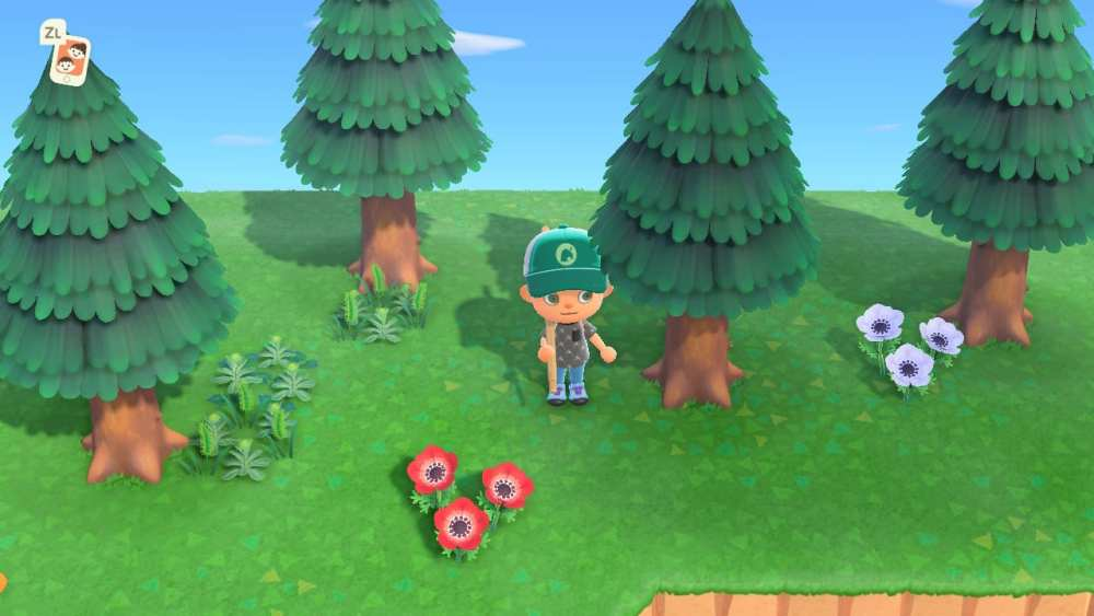 how to get pine cones in animal crossing new horizons