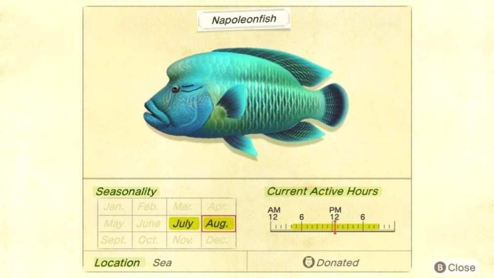 napoleonfish animal crossing new horizons