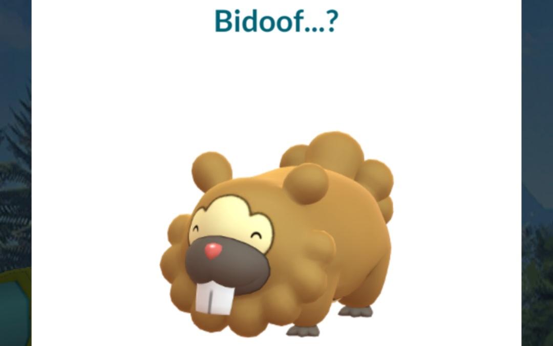bidoof special research