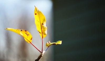 Leaf in Lewes, DE