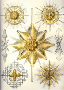 Interestingly, tiny protozoa use the element strontium (which gives Celestite its blue color) to build their skeletons…and as a result of the mineral's crystalline structures, their bodies end up looking like…stars. Go figure, Sirius + Sol = stars!