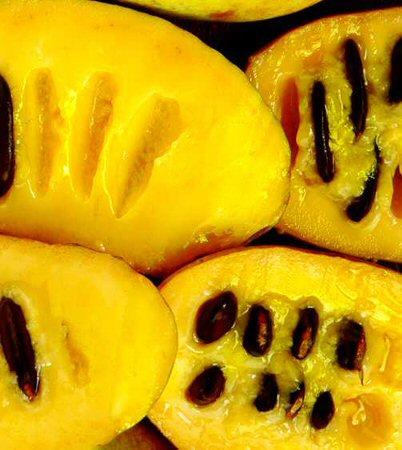 asimina fruit wiki