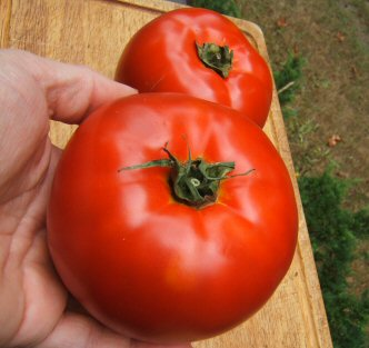"Tomato ""New Big Dwarf"""