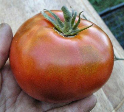"Tomato ""Sicilian Saucer"""