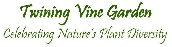 twining vine garden