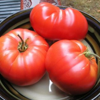 Tomato `russian rose`