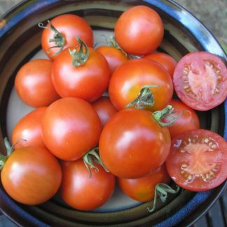 """Tomato """"Ross Red Saladette"""""""